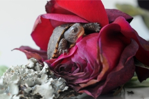 Tiny turtle and how it inspired me to take photographs of the magic I see in the natural world.