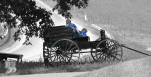 Amish boys in wagon