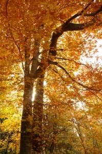 Fall Tree