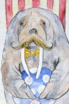 Walt the Walrus