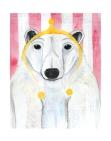 Paul the Polar Bear