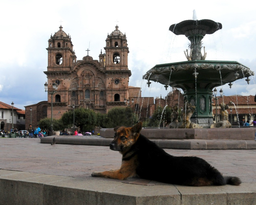 dog and fountain in Peru