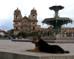 dog and fountain in Peru