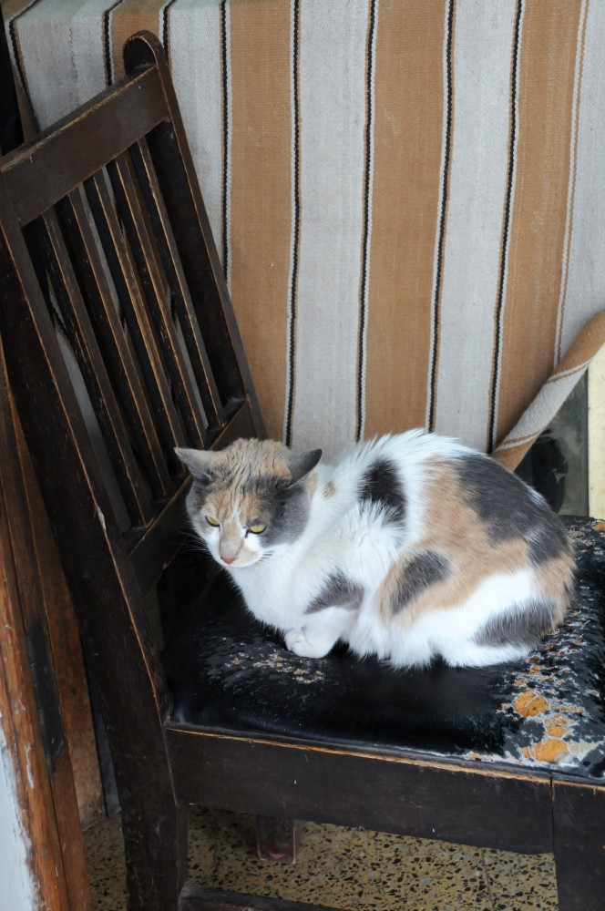 cat on a chair in peru