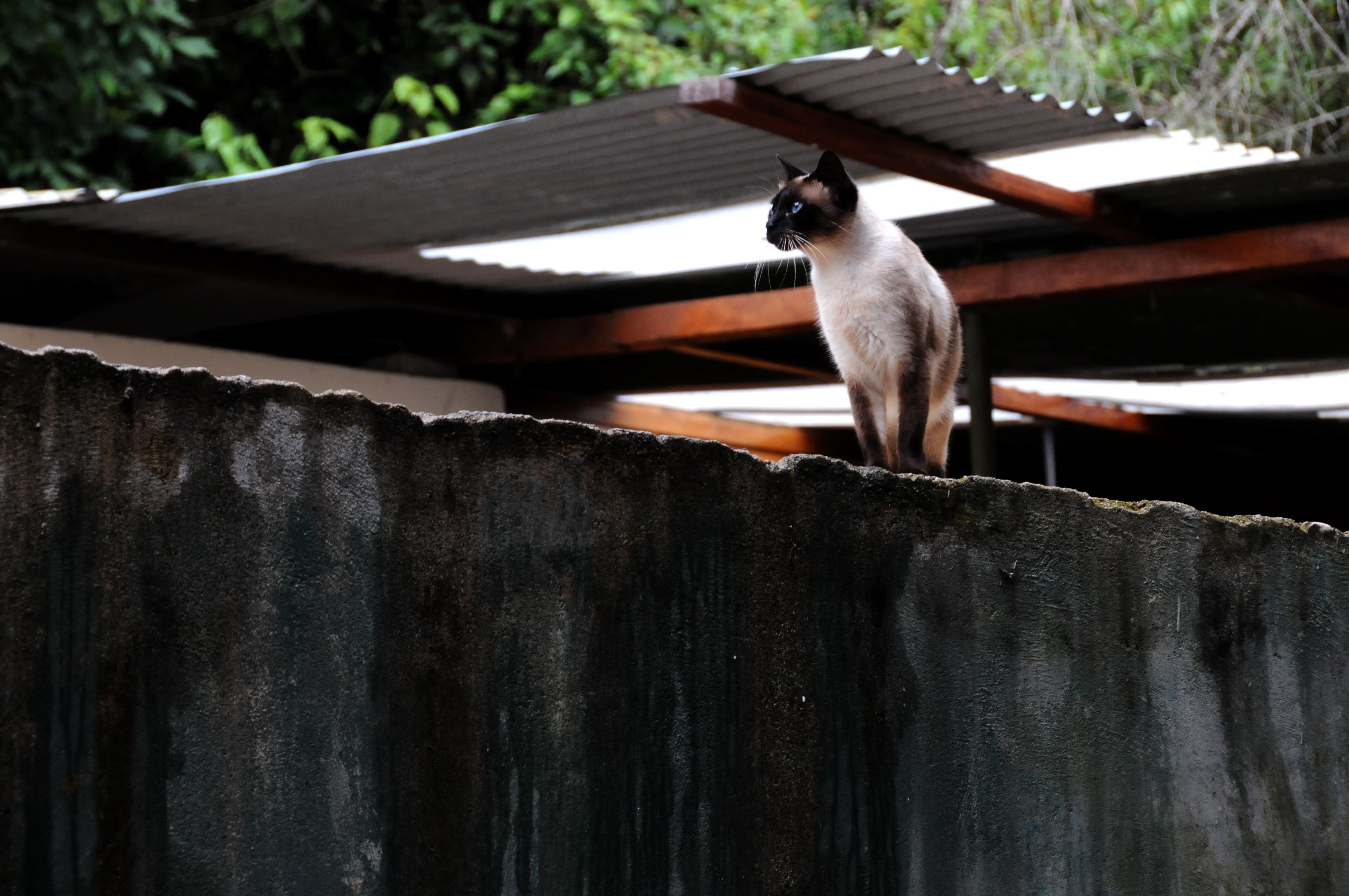 Cat in Peru