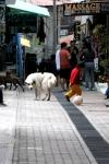 Dogs in Peru