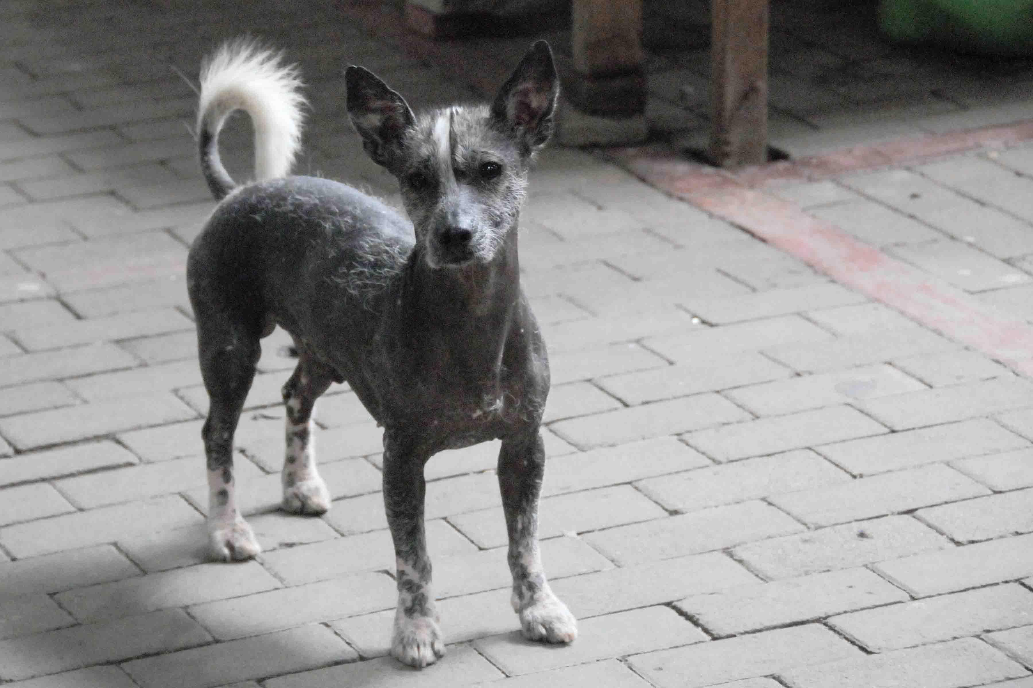 Dog in Peru