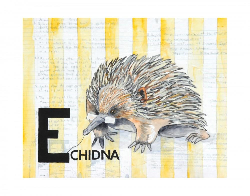 E-Echidna