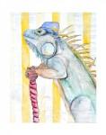 Francesco the Iguana