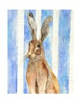 Wentworth the Jack Rabbit