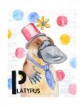 P-Platypus