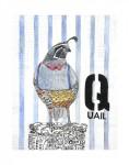 Q-Quail