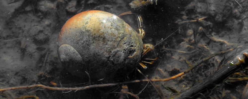 Hermit Crab Rendezvous